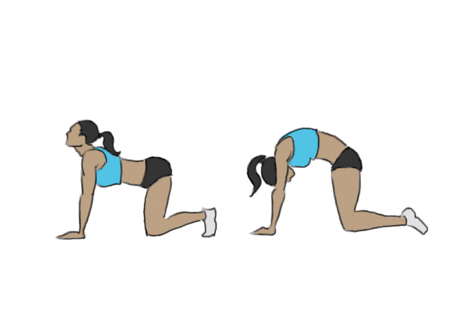 Hollow back, round back / Cat pose - GoFitnessPlan